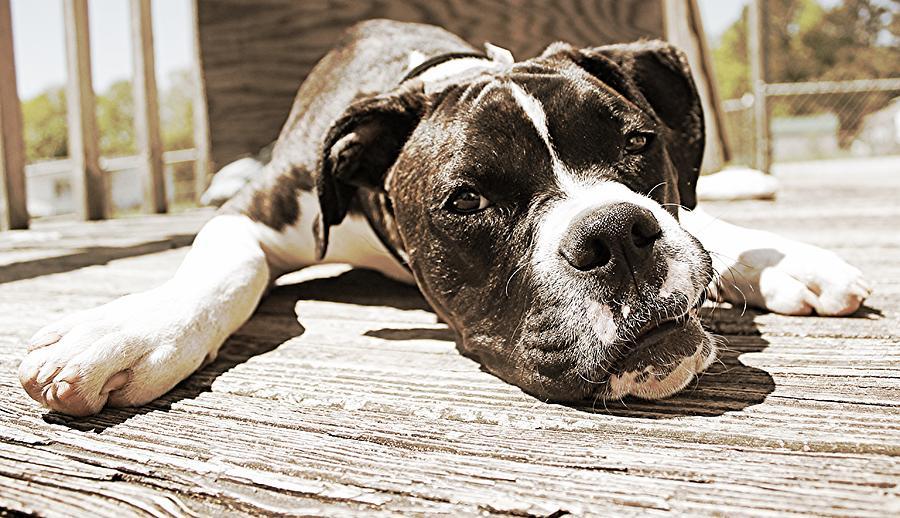 Dog Photograph - Sun Bathing by Sarah E Kohara
