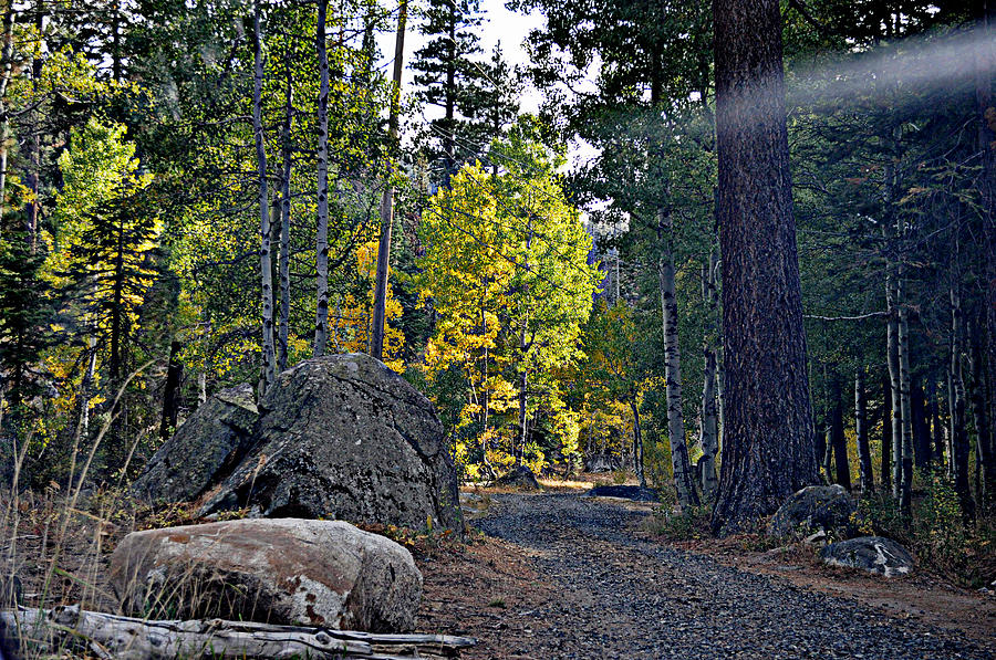 Forests Photograph - Sun Beam by Lynn Bawden