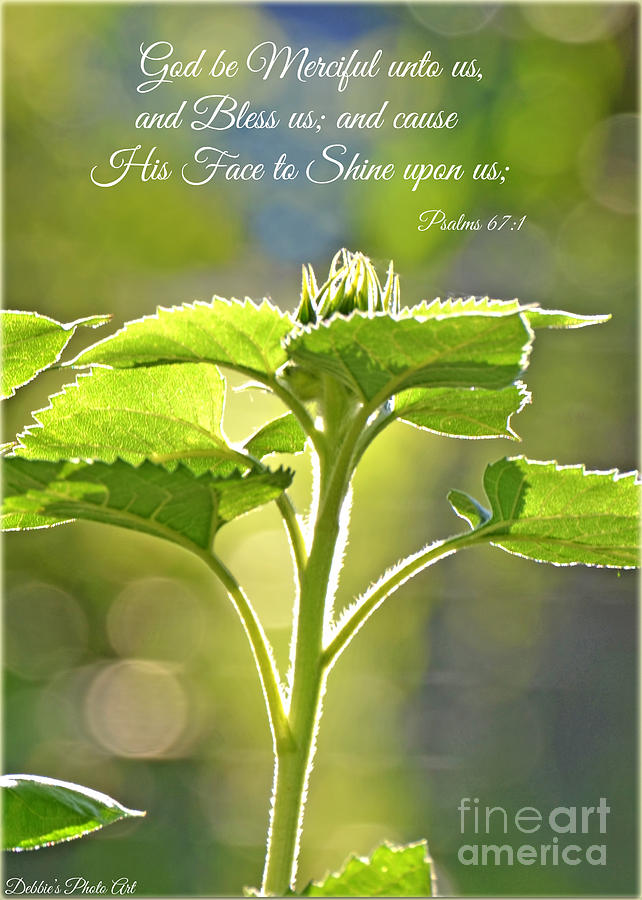 Greeting Card Photograph - Sun Drenched Sunflower With Bible Verse by Debbie Portwood