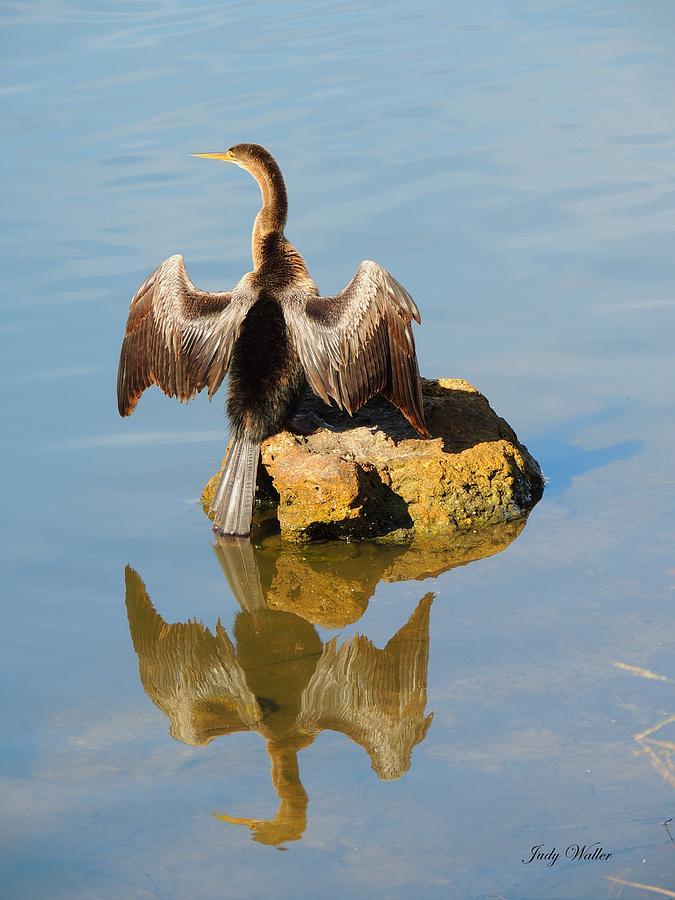 Bird Photograph - Sun Dried by Judy  Waller