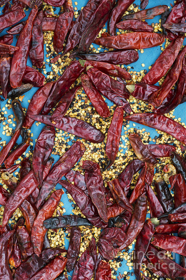 Dry Photograph - Sun Dried Red Chilli Peppers by Tim Gainey