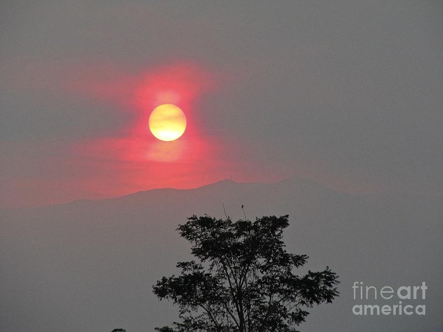 No Digital On This Photograph - Sun Fire Tree by Phyllis Kaltenbach