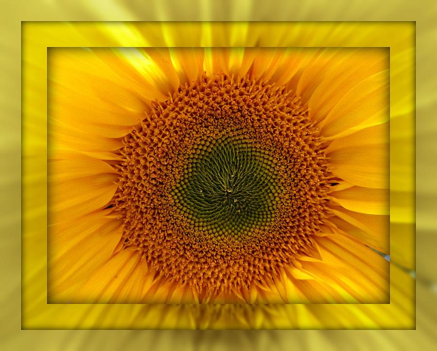 Sun Flower Dream by John Shiron