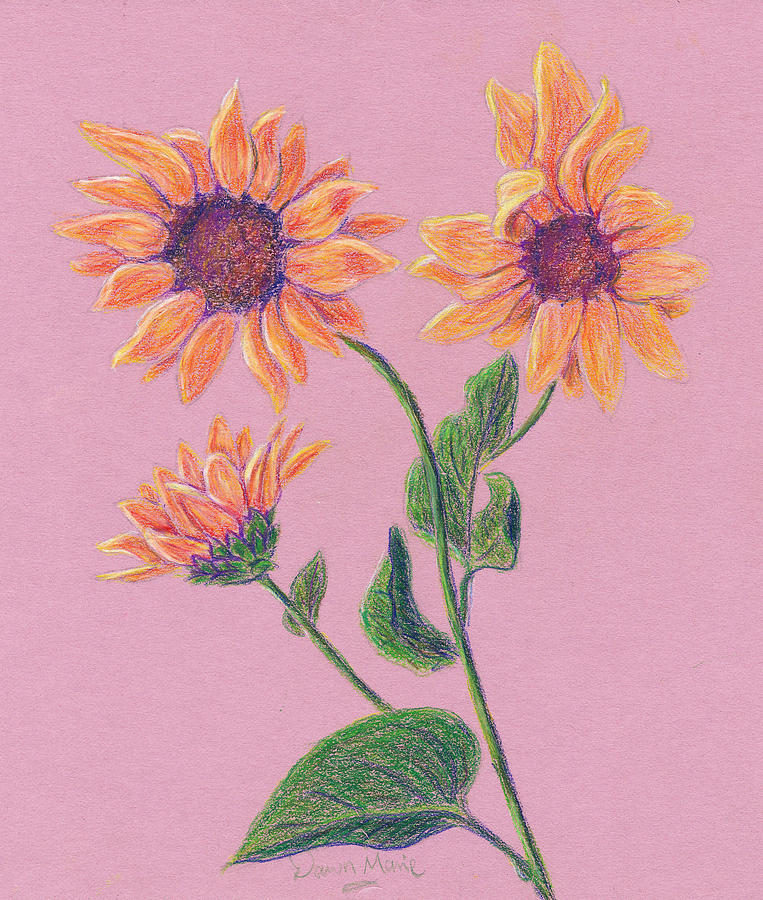 Flowers Drawing - Sun Flowers by Dawn Marie Black
