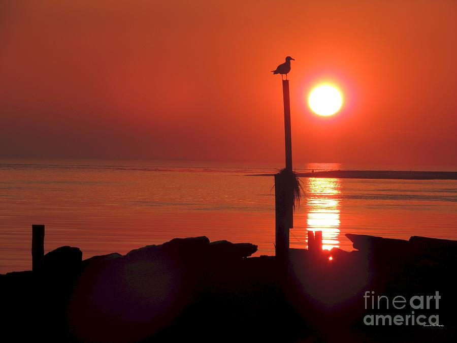 Ocean Photograph - Sun Gull by Laurence Van Oliver