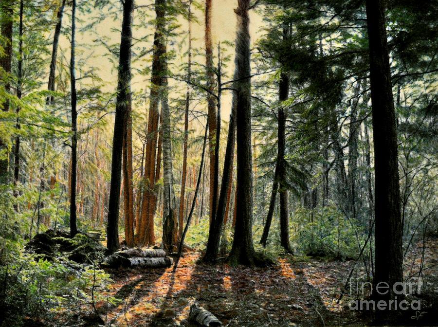 Landscape Drawing - Sun In The Hemlocks by Susan Fraser SCA  B Sc