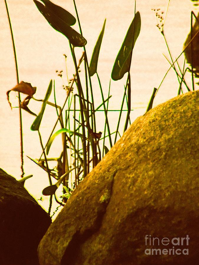 Grass Photograph - Sun Kissed Grass And Rocks   by Helene Guertin