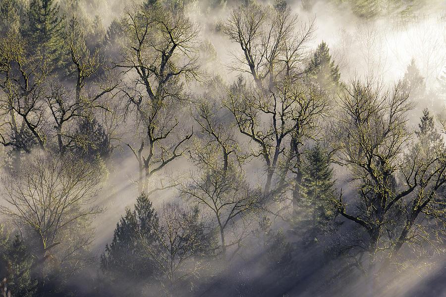Jonsrud Photograph - Sun Rays Through The Morning Mist by David Gn