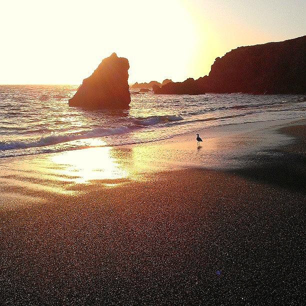 Sonoma Coast Photograph - Sun Rock Bird by CML Brown