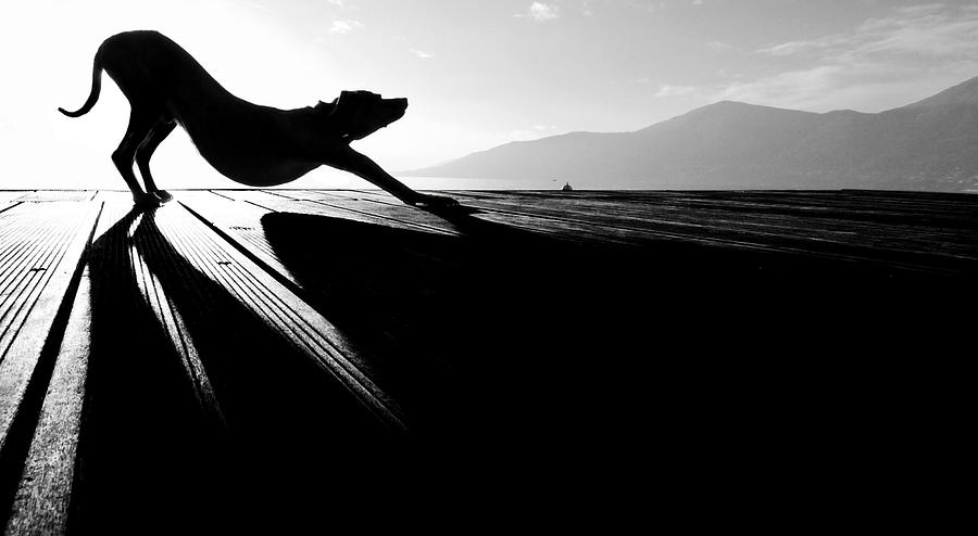 Bw Photograph - Sun Salutation by Christine Frick