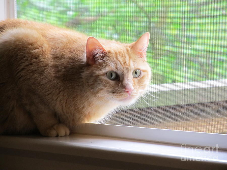 Cat Photograph - Sun Screened by Tracy L Teeter