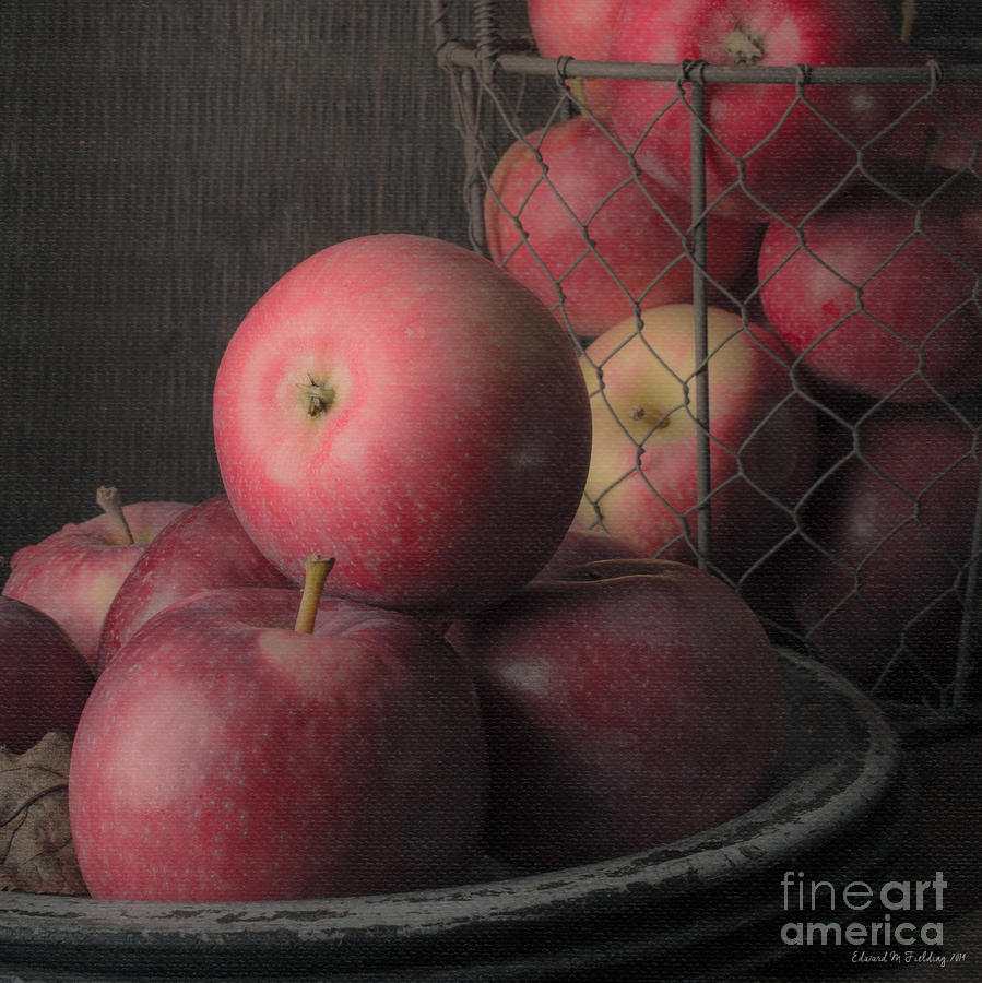 Fruit Photograph - Sun Warmed Apples Still Life Square by Edward Fielding