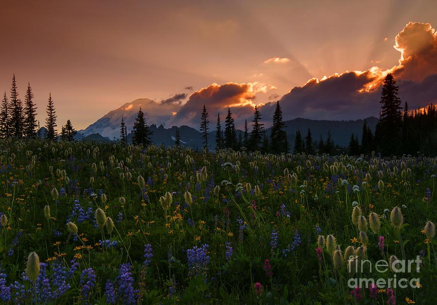 Mt. Rainier Photograph - Sunbeam Garden by Mike  Dawson