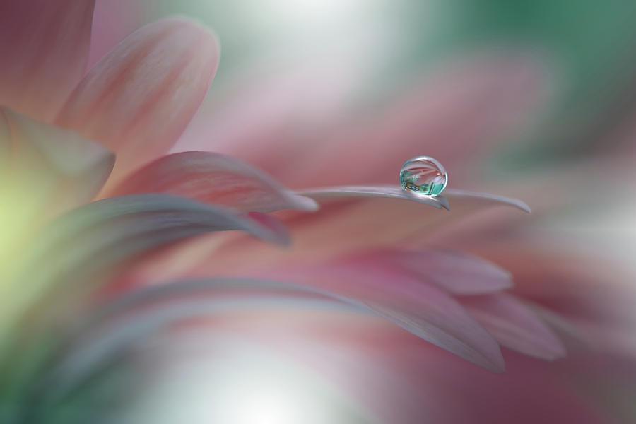 Flower Photograph - Sunbeam..ii by Juliana Nan