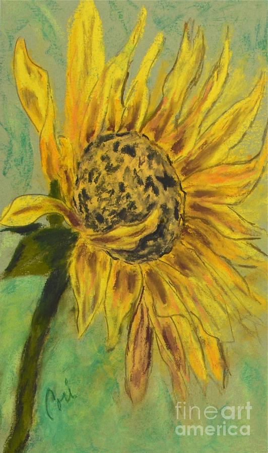 Sunflower Drawing - Sunburst by Cori Solomon