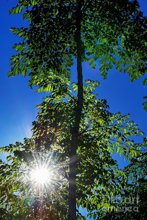 Sunburst Through The Trees By Kaye Menner Photograph