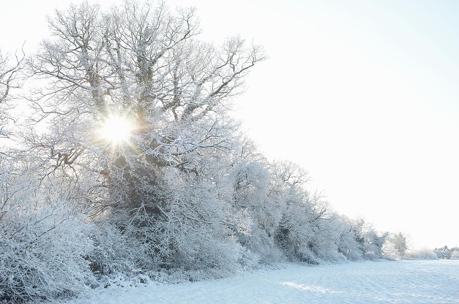 Sunburst Through Trees In Winter Photograph by Dougal Waters