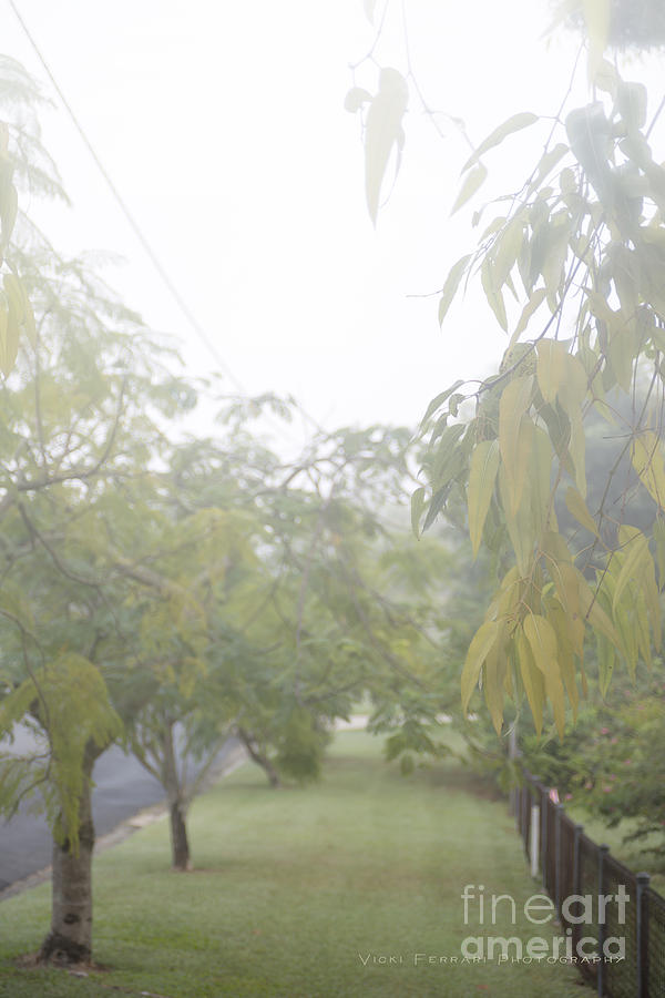 Sunday Street Fog by Vicki Ferrari