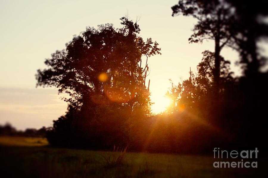 Sunflare Sunset Photograph