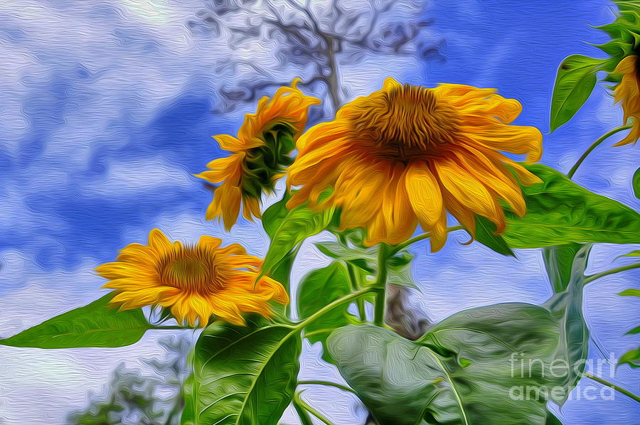 Sunflower Photograph - Sunflower Art by George Paris