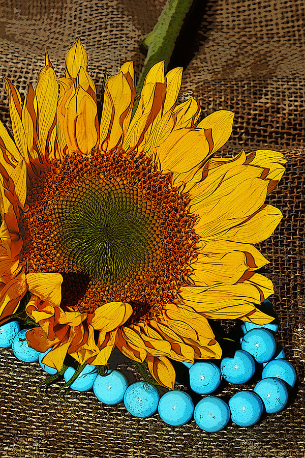 Sunflower Burlap And Turquoise Photograph By Phyllis Denton