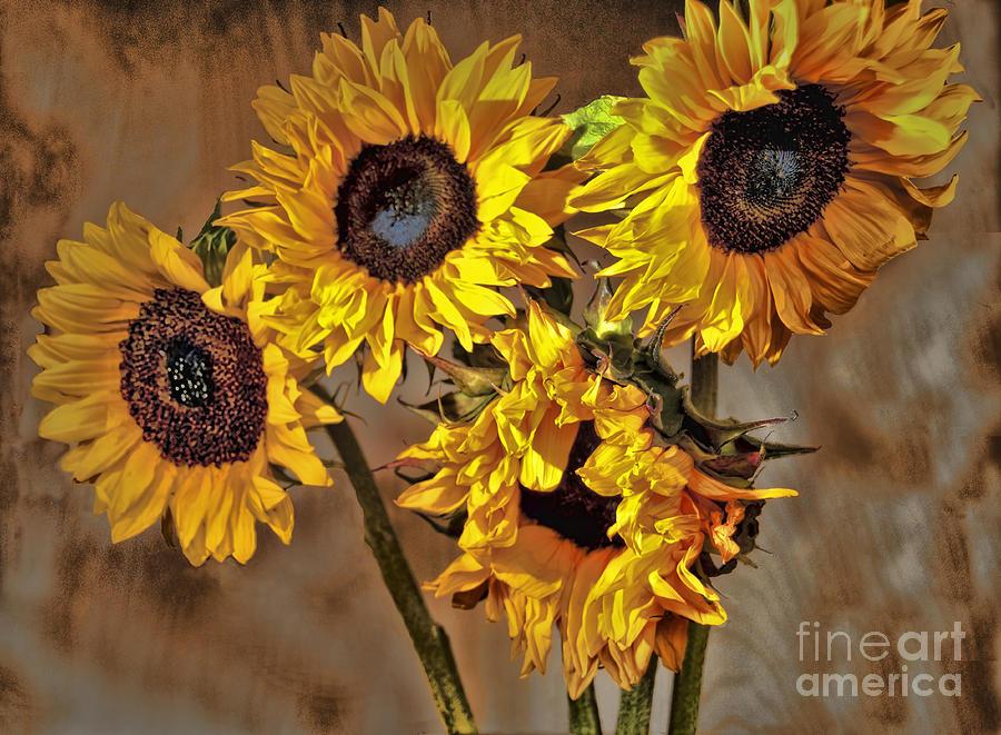 Sunflower Drama by Sheila Laurens