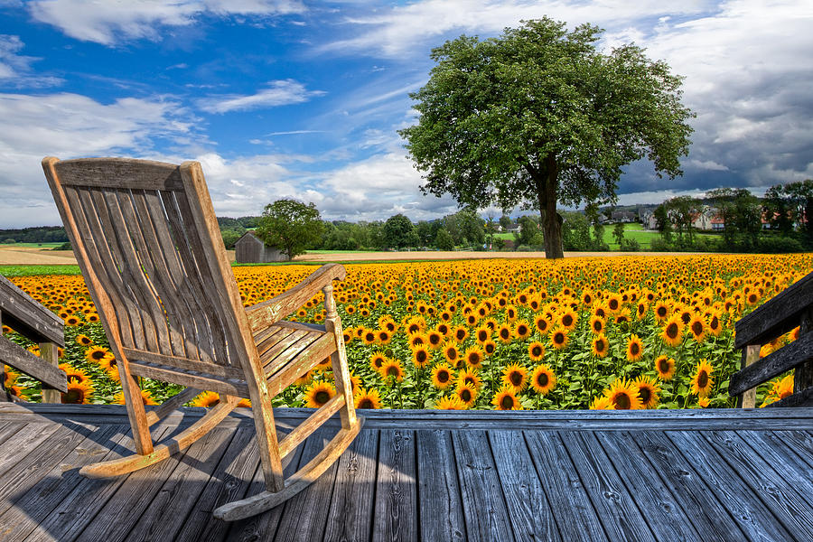 Austria Photograph - Sunflower Farm by Debra and Dave Vanderlaan