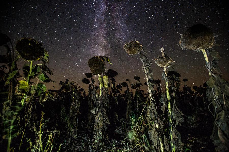 Milky Way Photograph - Sunflower Field At Night by Aaron J Groen