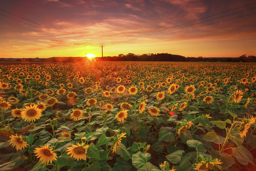 Photography Aesthetic Sunflower Field