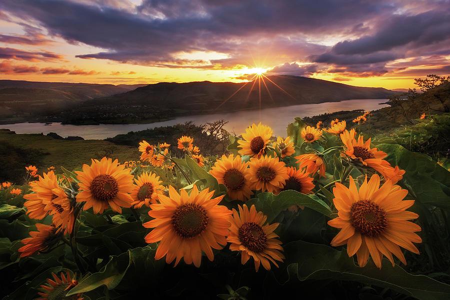 Sunflower Field Photograph by Jeremy Cram Photography