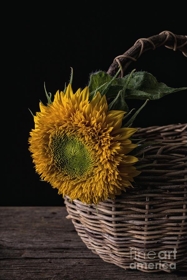 Flower Photograph - Sunflower In A Basket by Edward Fielding