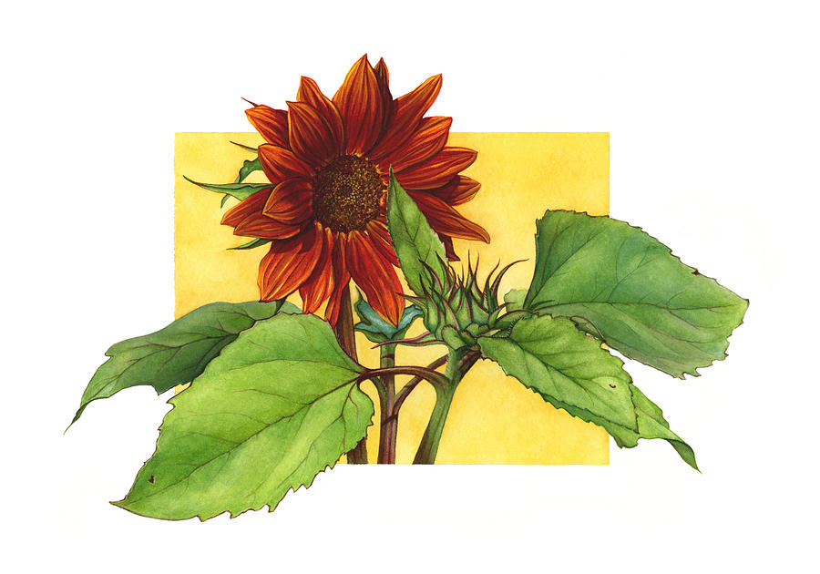Sunflower Painting - Sunflower In Red by Suzannah Alexander