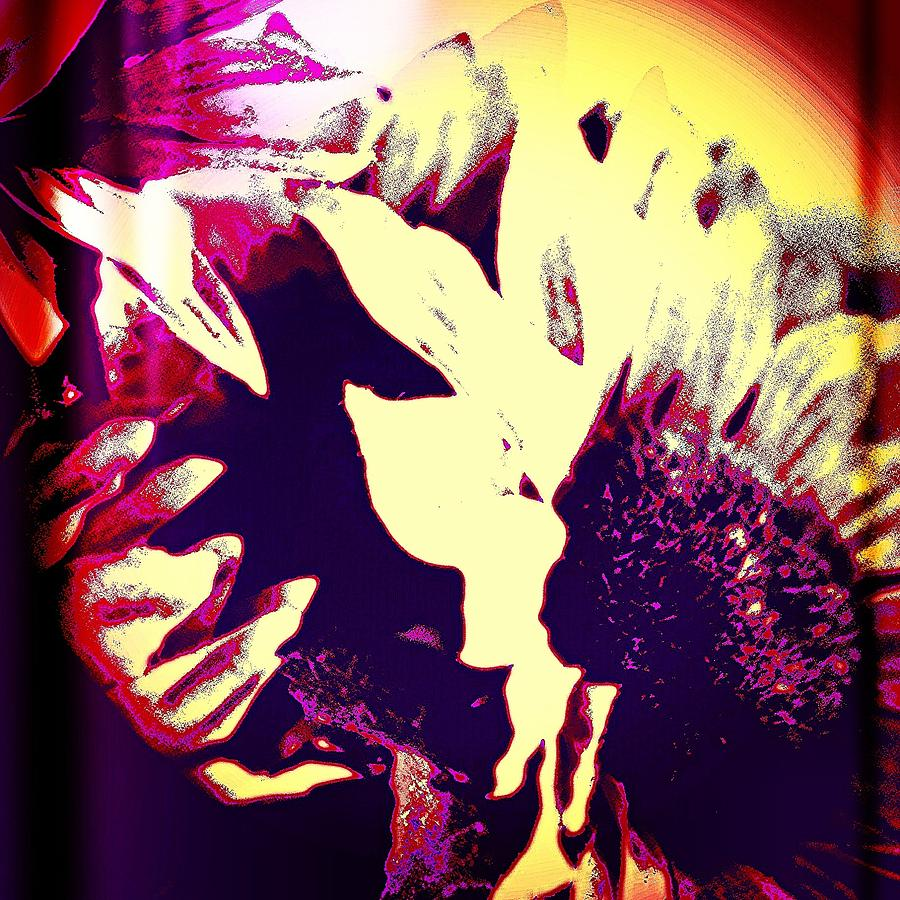 Sunflower Photograph by J Roustie