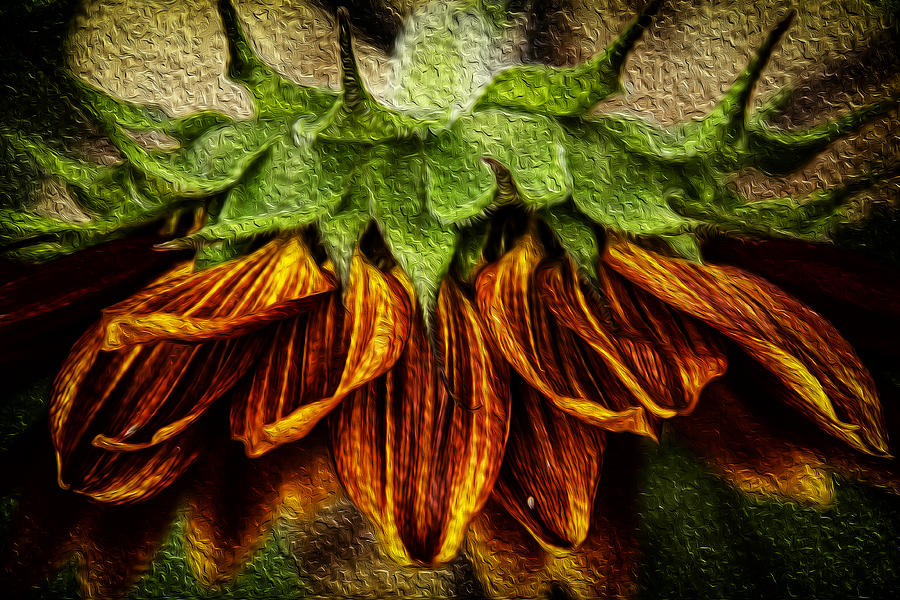 Sunflower Digital Art - Sunflower by John Monteath