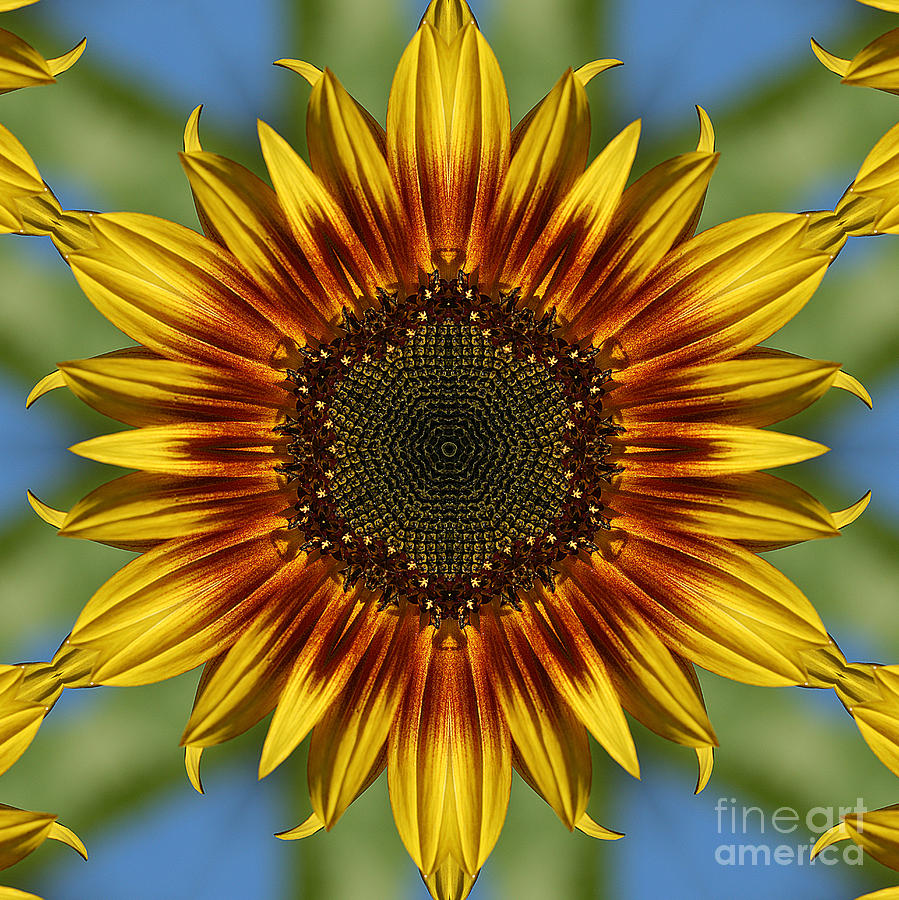 Cindi Ressler Photograph - Sunflower Kaleidoscope by Cindi Ressler