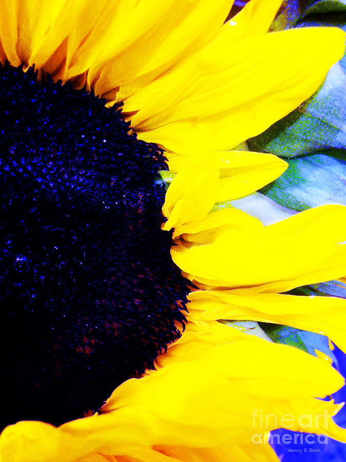 Sunflower On The Side Photograph