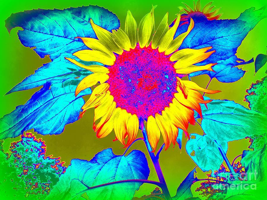 Garden Photograph - Sunflower Pop by Ed Weidman
