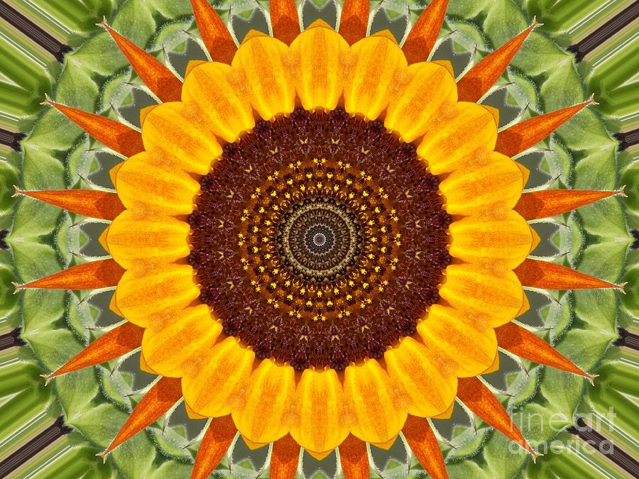 Yellow Photograph - Sunflower Power by Annette Allman