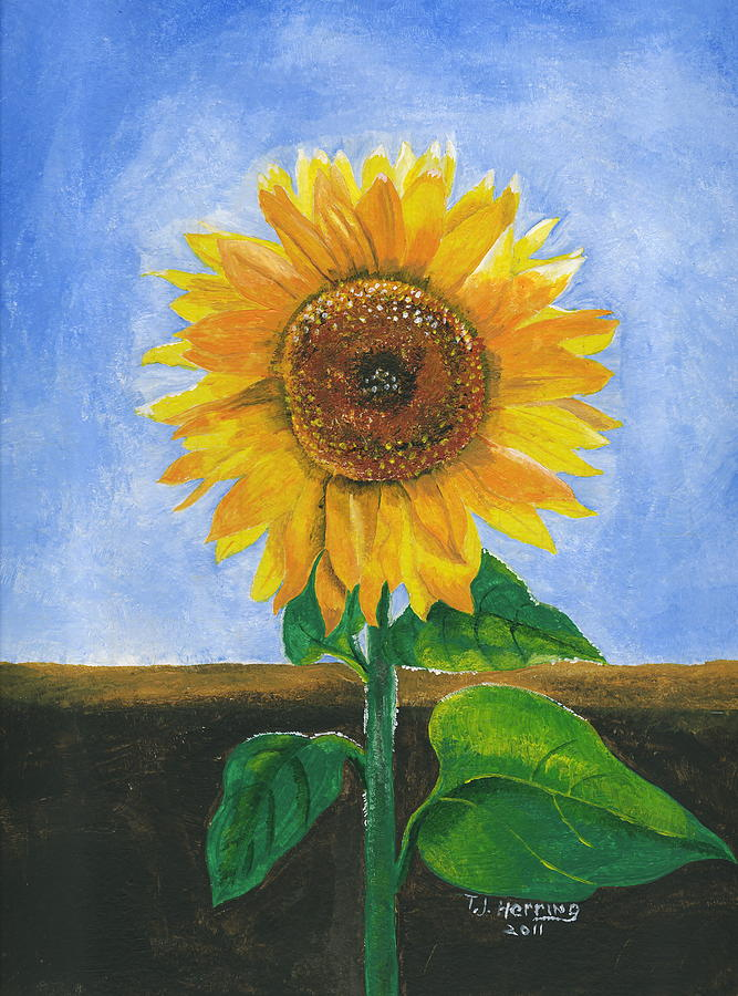 Sunflower Series Two by Thomas J Herring