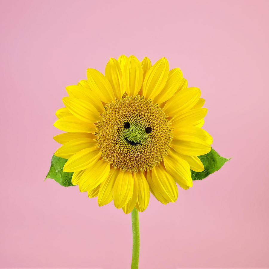 Sunflower Smiley Face Photograph by Juj Winn