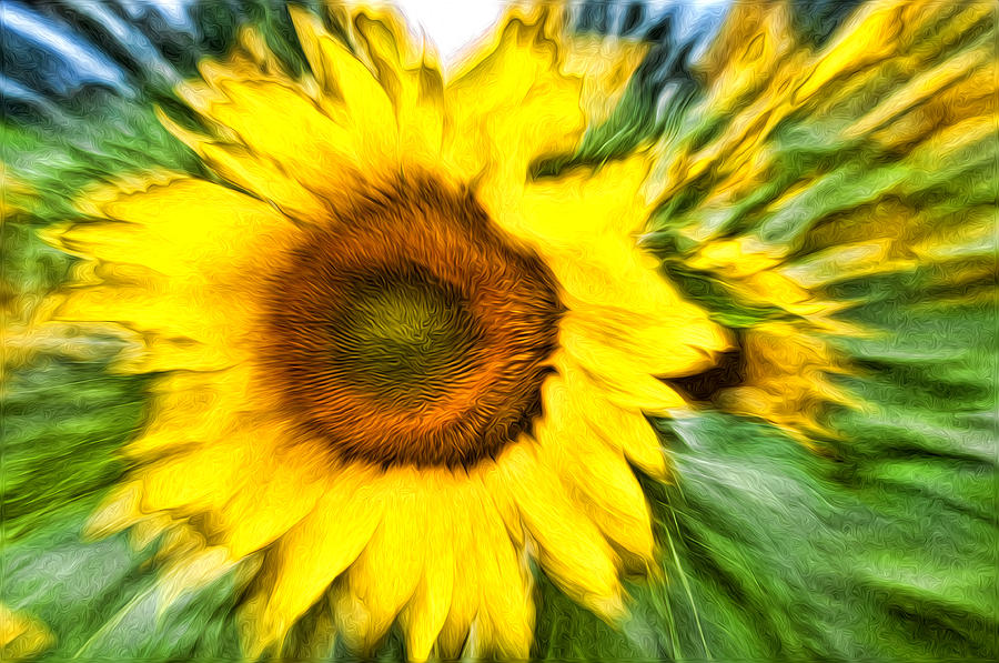 Flowers Photograph - Sunflower Study 4 by Mitchell Brown