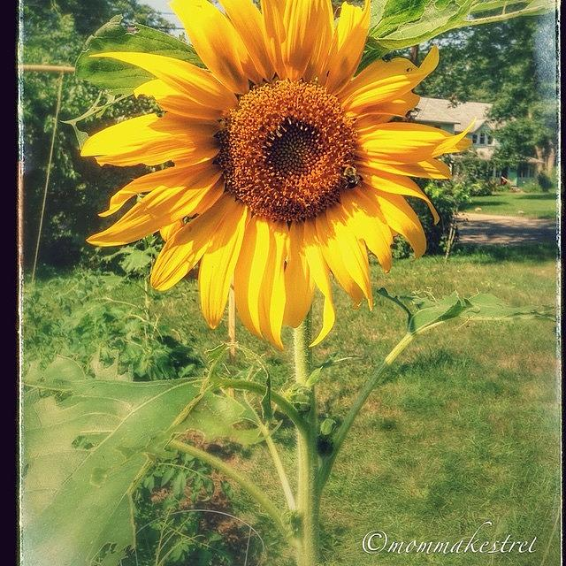 Summer Photograph - Sunflower by Keila Carvalho