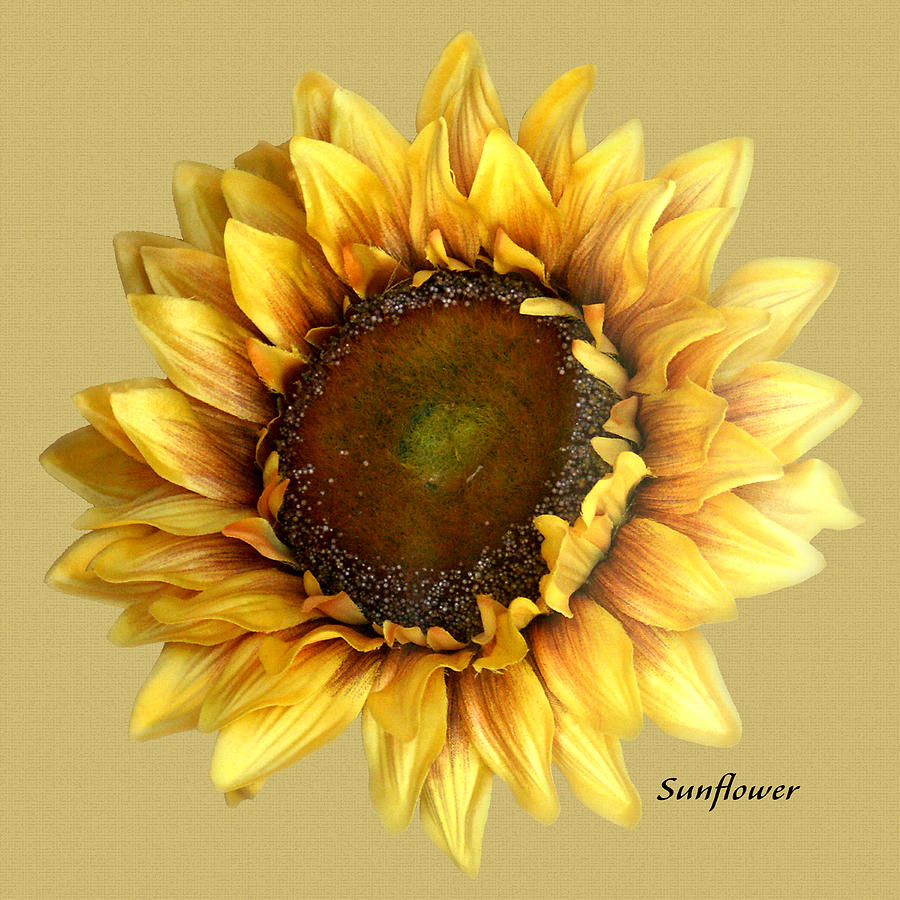 Floral Digital Art - Sunflower by Tom Romeo