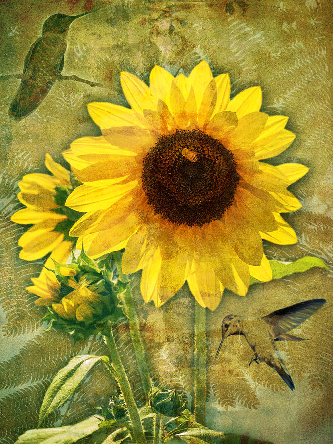 Sunflower with Bee Number Nineteen by Bob Coates