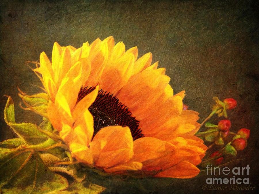 Sunflower - You Are My Sunshine Digital Art