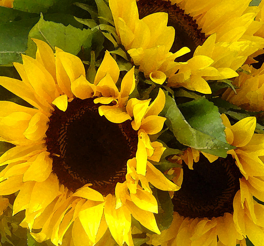 Sunflowers by Amy Vangsgard