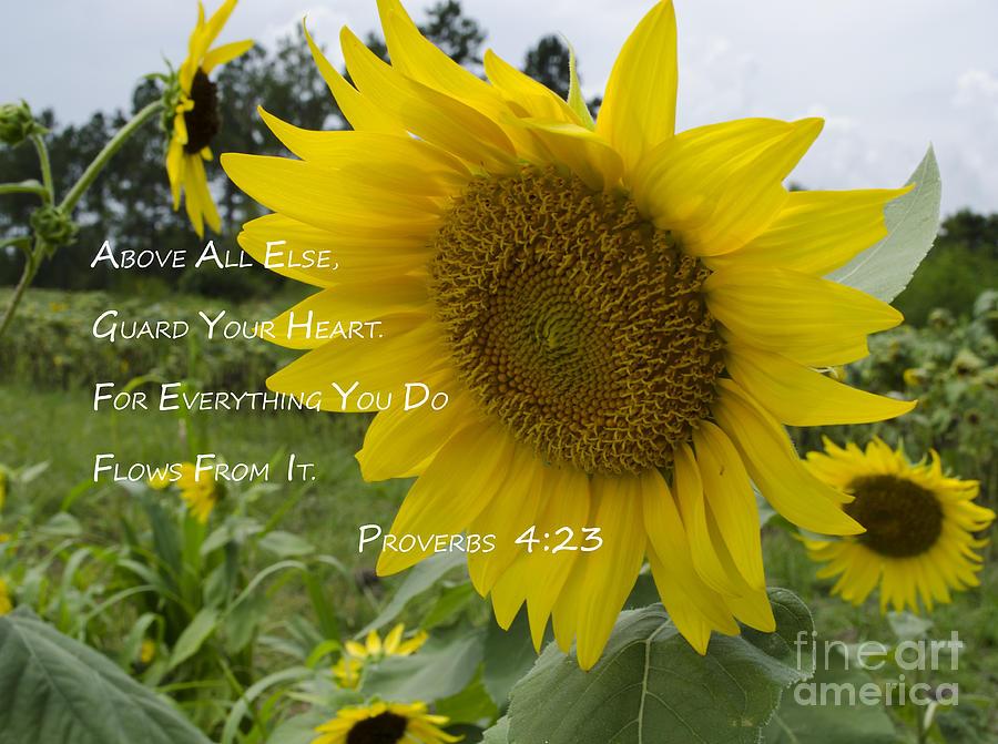 Bainbridge Photograph - Sunflowers And A Verse by Debra Johnson