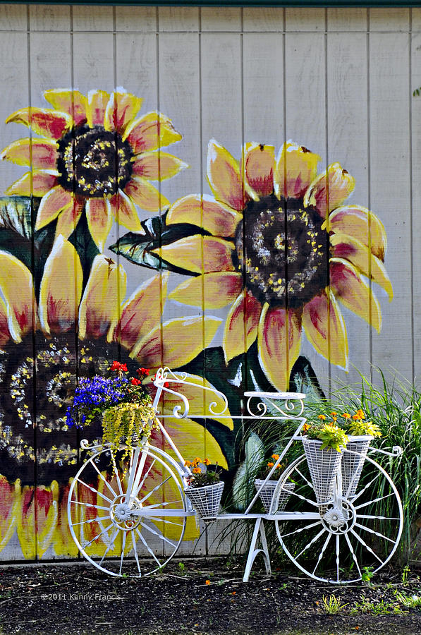 Kenny Francis Photograph - Sunflowers And Bicycle by Kenny Francis