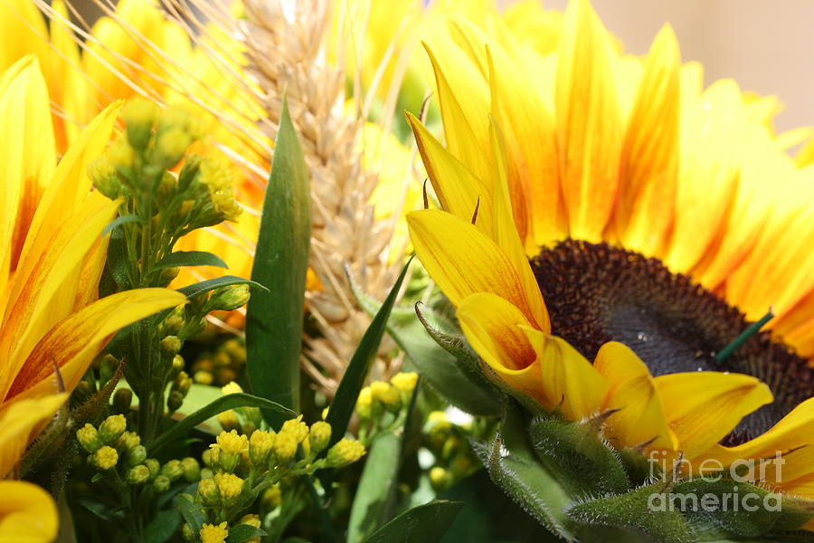 Sunflowers and Wheat by Julie Alison