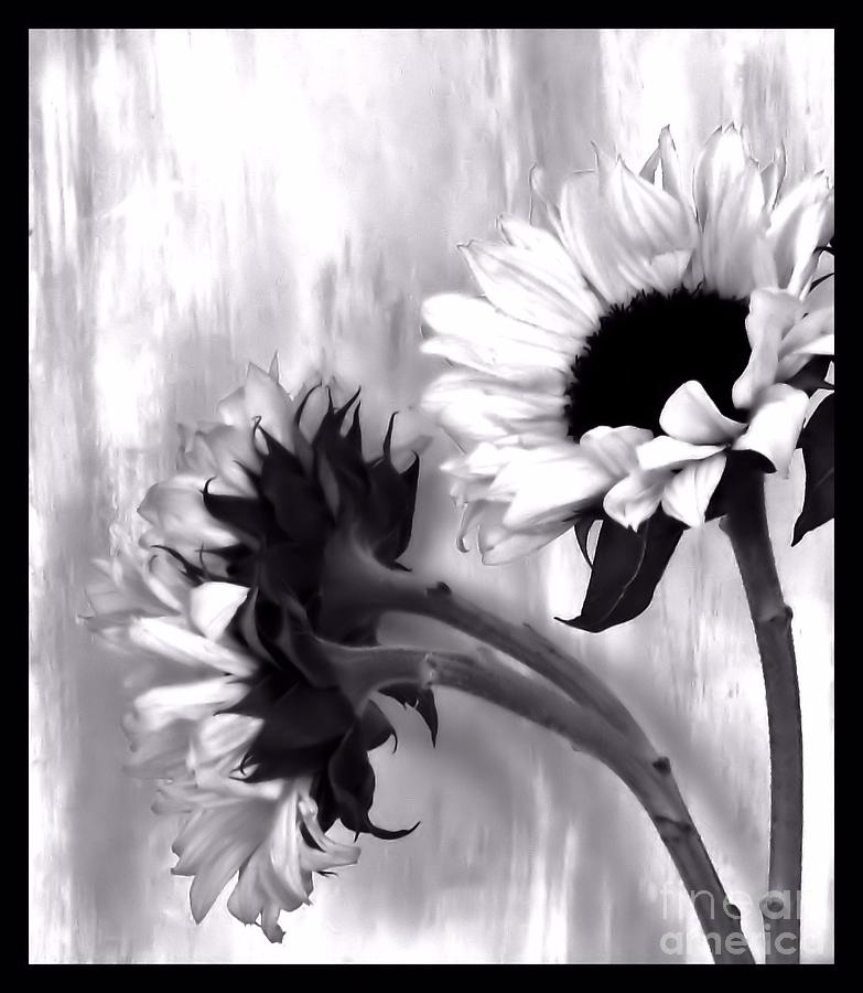 Sunflowers Black And White Photograph By Marsha Heiken